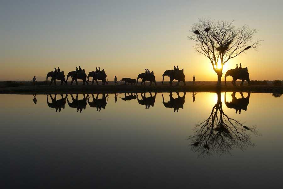 Camp Jabulani elephant safari at dusk