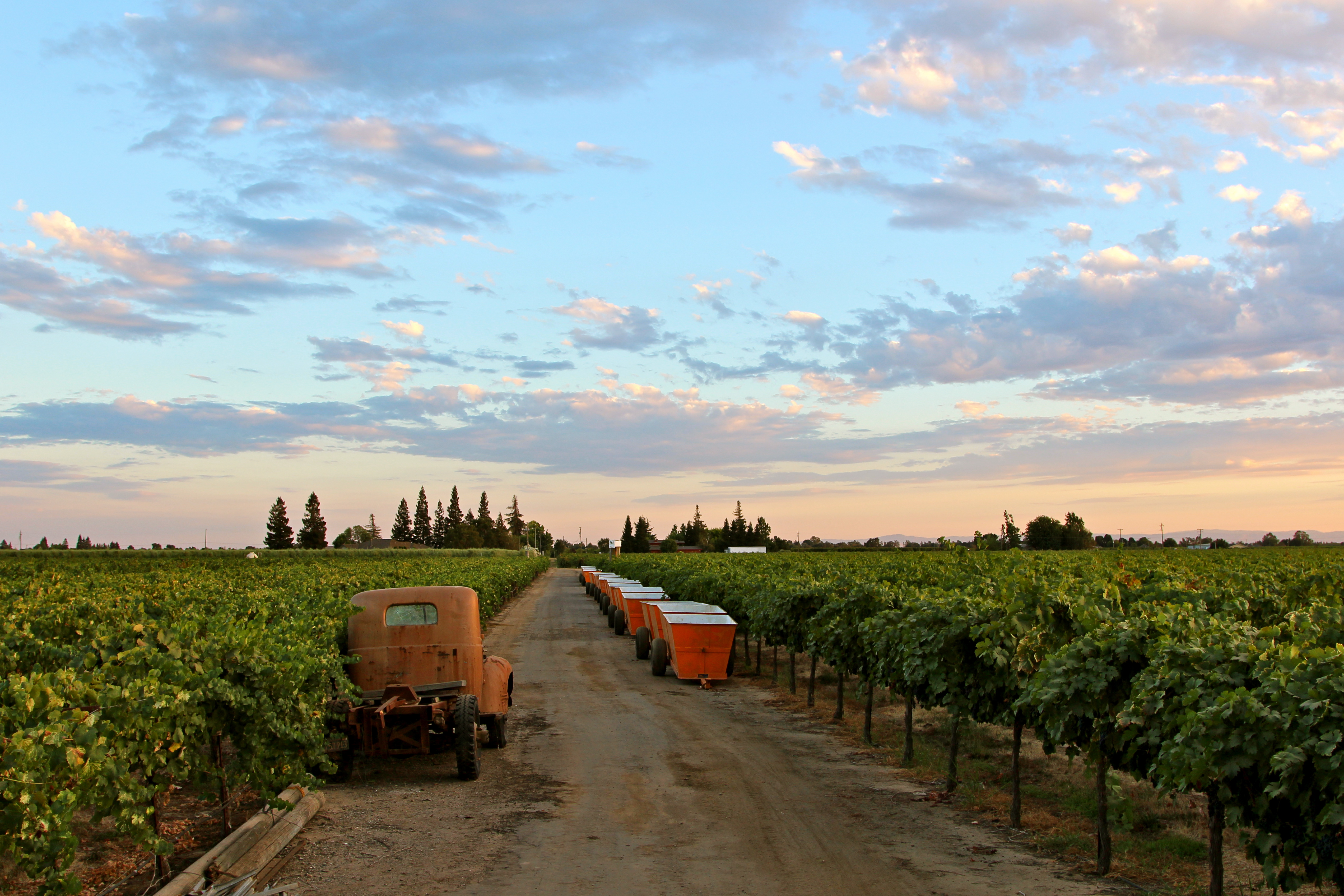 "In California, The Best of ""America's Grape"""