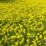 Fischer & Wieser Mustard Show-Down