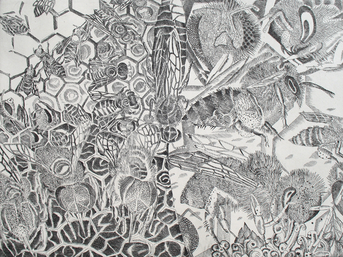 Elke Daemmrich, Bees, copper engraving, 12″ x 16″.
