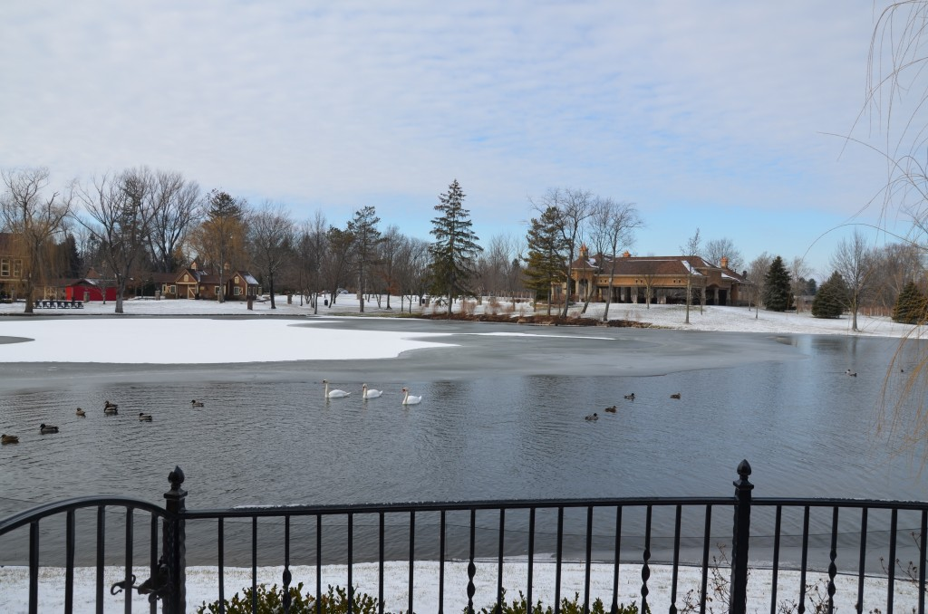 Ducks and geese on the lake