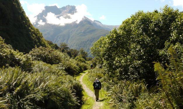Growing Segment of Travellers Booking Walking Tours