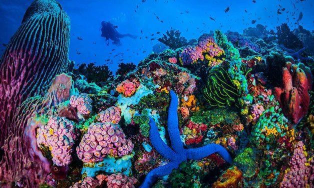 Descend Into Sombrero Island's Tubastraea Heart