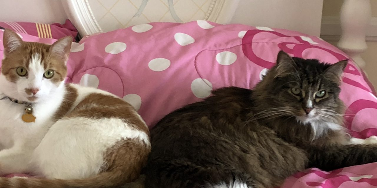 Boutique Luxury Cat Hotel & Resort, No Dogs Allowed