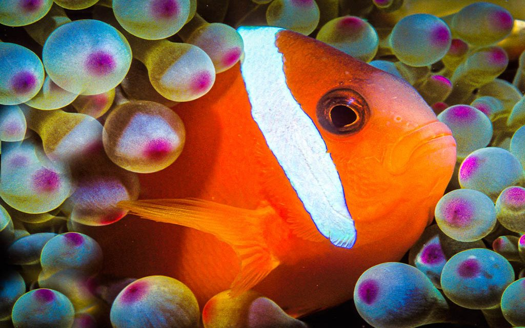 Fish Photography: The Ultimate Undersea Skill