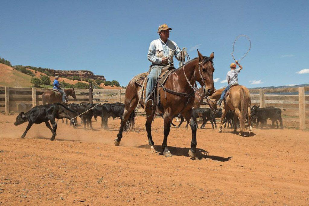 Play Cowboy at a Working Ranch
