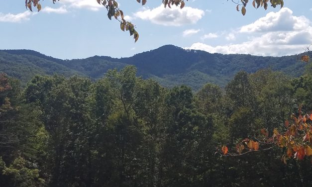 Small Town Vibes And The Bonds Of Family In Black Mountain, North Carolina