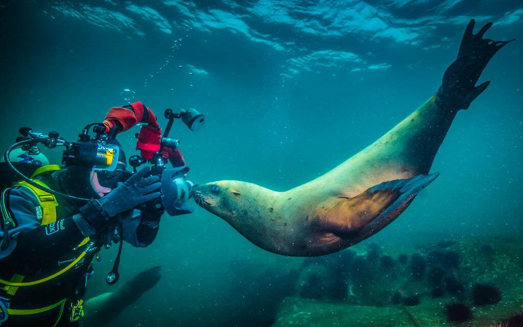 Into the Sea Lion's Den